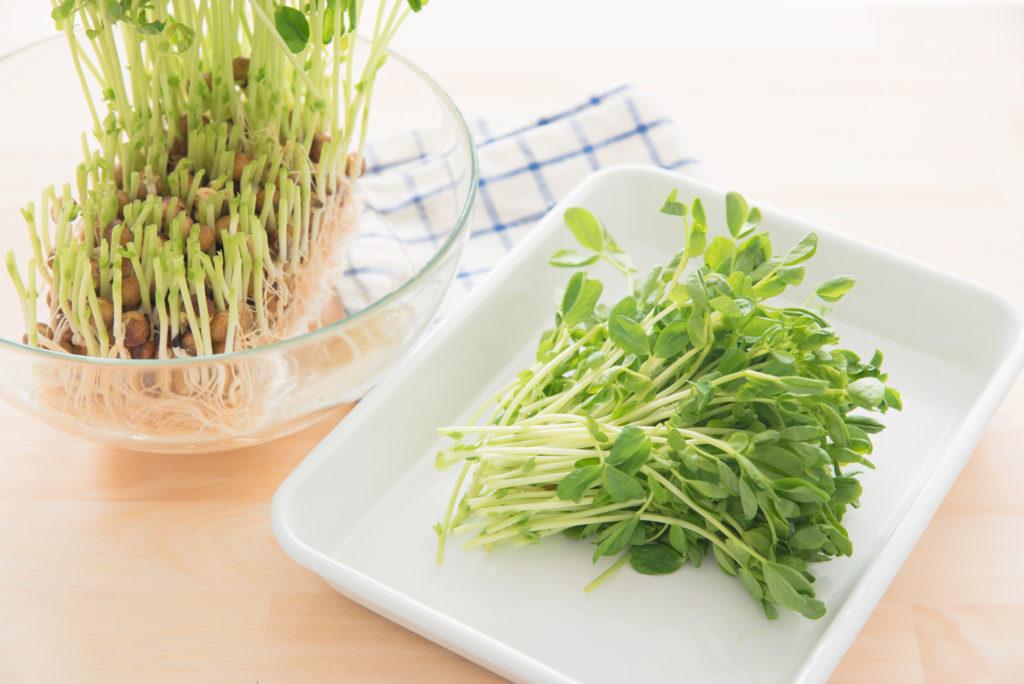 お手頃価格で美しく。「豆苗」の美容効果&簡単レシピ